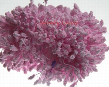meeldraadjes foam rose 5 mm